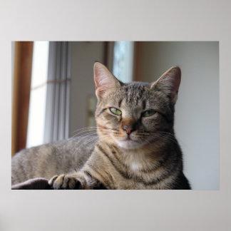 Cute Kitten Cat Poster  (Misty)