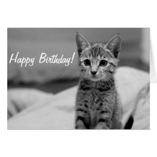 Cute Kitten Happy Birthday Card