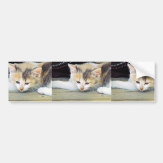 Cute Kitten Laying On Floor With Sad Face Bumper Sticker