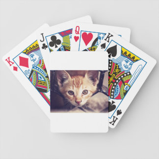 Cute Kitten looking at YOU Bicycle Playing Cards
