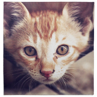 Cute Kitten looking at YOU Napkin