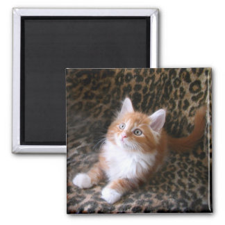 Cute kitten on leopard print square magnet