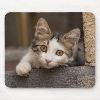 Cute kitten peeking out, Turkey Mouse Pad