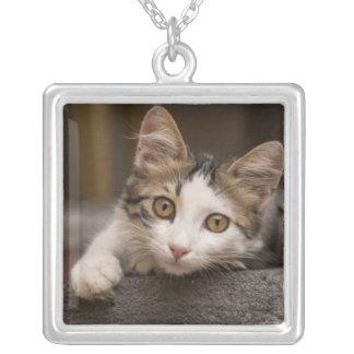 Cute kitten peeking out, Turkey Silver Plated Necklace