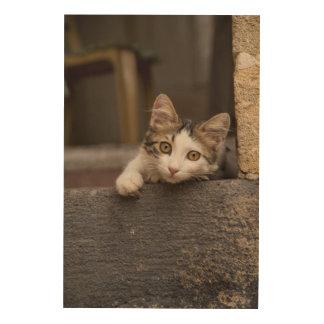 Cute kitten peeking out, Turkey Wood Wall Decor