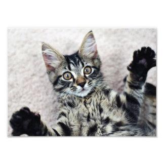 Cute Kitten Photo Print
