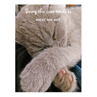 Cute Kitten Postcard
