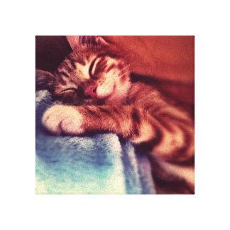 Cute kitten sleeping canvas print