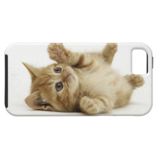 Cute Kitten Tough iPhone 5 Case