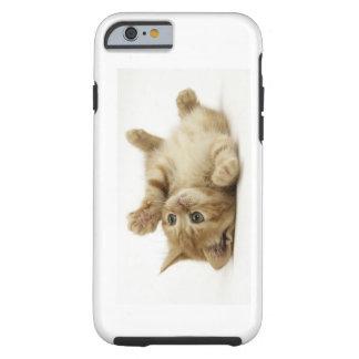 Cute Kitten Tough iPhone 6 Case