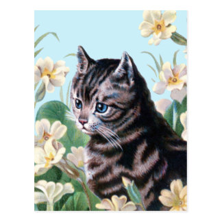 Cute kitten - vintage cat art postcard