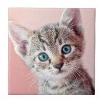 Cute kitten with blue eyes.