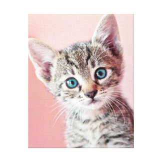 Cute kitten with blue eyes gallery wrapped canvas
