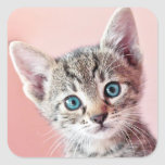 Cute kitten with blue eyes. square sticker