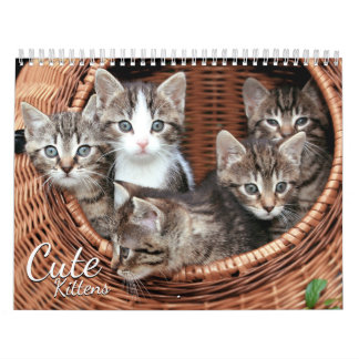 Cute Kittens 2017 Cat Pet Photo Calendar