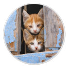 Cute Kittens in a Vintage Window, Decorative Ceramic Knob