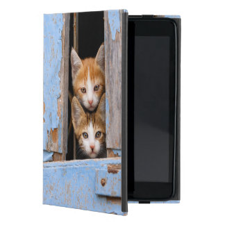 Cute Kittens in a Vintage Window, protection hard Cases For iPad Mini