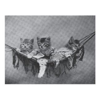 Cute Kittens Postcard