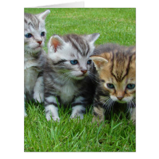 Cute kittens sitting in grass card