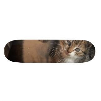 CUTE KITTIES SKATE BOARDS
