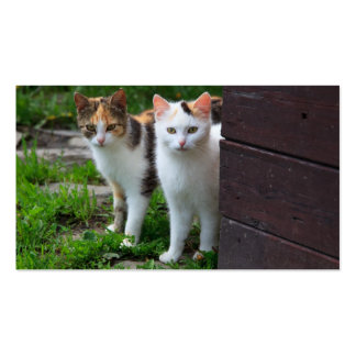 Cute Kitty Cat Couple Pack Of Standard Business Cards