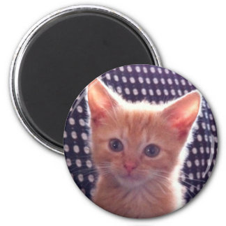 Cute kitty cat red cream 6 cm round magnet