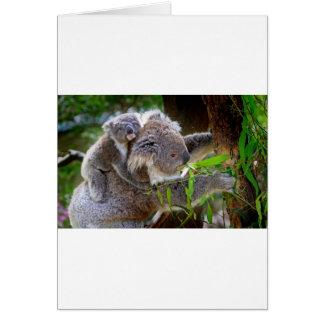 Cute Koala Bear Destiny Nature Aussi Outback Cards