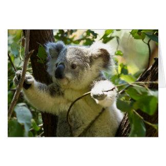 Cute Koala Bear Destiny Nature Aussi Outback Greeting Card