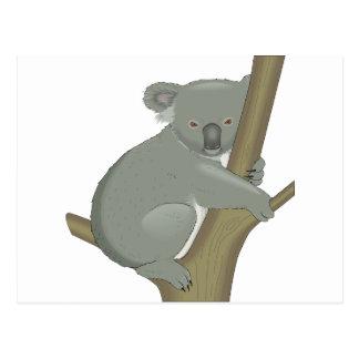 Cute Koala Bear Destiny Nature Aussi Outback Post Card