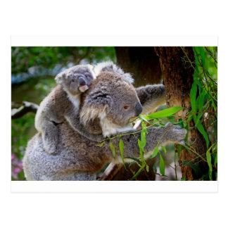 Cute Koala Bear Destiny Nature Aussi Outback Post Cards