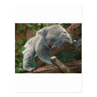 Cute Koala Bear Destiny Nature Aussi Outback Postcard