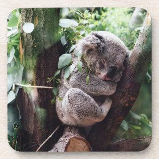 Cute Koala Bear relaxing in a Tree Coaster