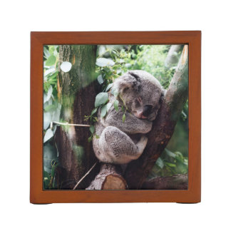 Cute Koala Bear relaxing in a Tree Desk Organiser