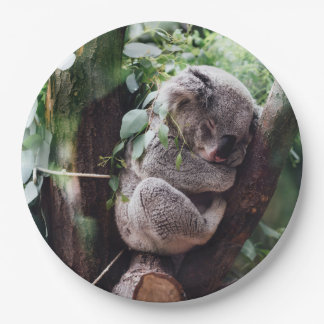 Cute Koala Bear relaxing in a Tree Paper Plate