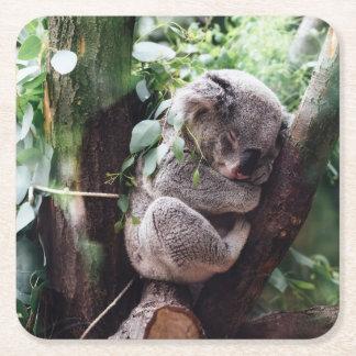 Cute Koala Bear relaxing in a Tree Square Paper Coaster