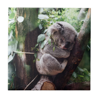 Cute Koala Bear relaxing in a Tree Tile