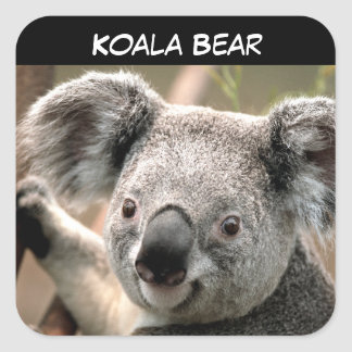 Cute Koala Bear Square Sticker