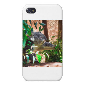 Cute Koala iPhone 4/4S Cover
