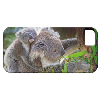 Cute Koalas Case For The iPhone 5