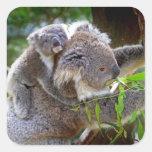 Cute Koalas Square Sticker
