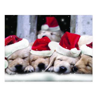 Cute labrador puppies with x-mas hats postcard