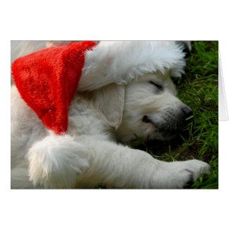 Cute labrador puppy with x-mas hat card