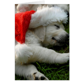 Cute labrador puppy with x-mas hat greeting card