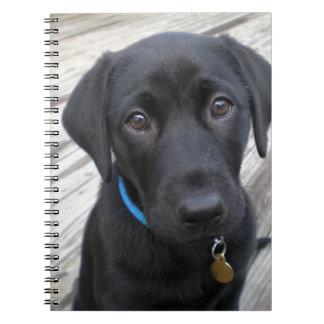Cute labs notebook