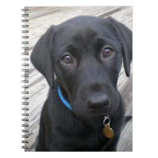Cute labs spiral notebook