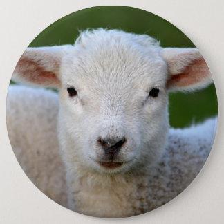 Cute lamb portrait 6 cm round badge
