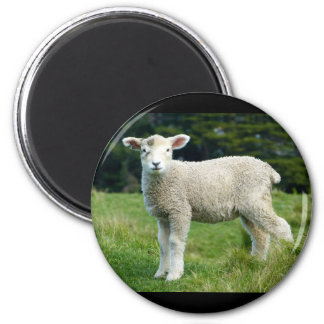Cute Lamb with Muddy Face in the Meadow 6 Cm Round Magnet