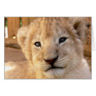 Cute Lion Cub Card