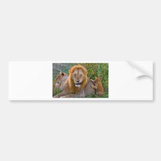 Cute Lion Cub Playing With Dad, Kenya Bumper Sticker