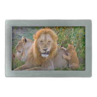 Cute Lion Cub Playing With Dad, Kenya Rectangular Belt Buckles